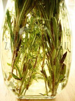 Изображение рецепта Ароматное прованское масло