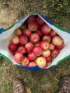 Обмытые и очищенные от сердцевинок яблоки нарезаем на 6-8 долек. Складываем в большую и глубокую кастрюлю, заливаем чуть-чуть воды (буквально, чтобы покрыть дно кастрюли).
